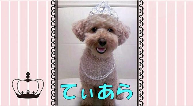 ペット情報サイト「ワンワンAve.」愛犬自慢にいいね!クリックがいっぱい