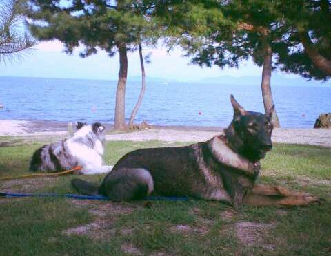 恒例の「犬一揆PSD琵琶湖キャンプ」が開催されました