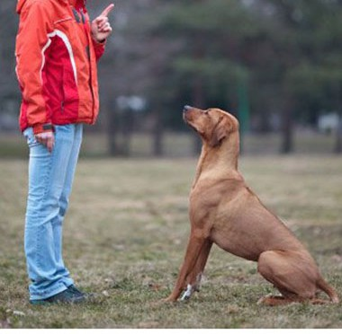 ペット情報サイト「ワンワンAve.」犬と防災 まずは愛犬の身分証明書を作ろう!