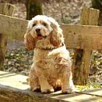 11/28紅葉の中、山紫水明の都で愛犬と一緒に楽しむBBQパーティー開催のお知らせ